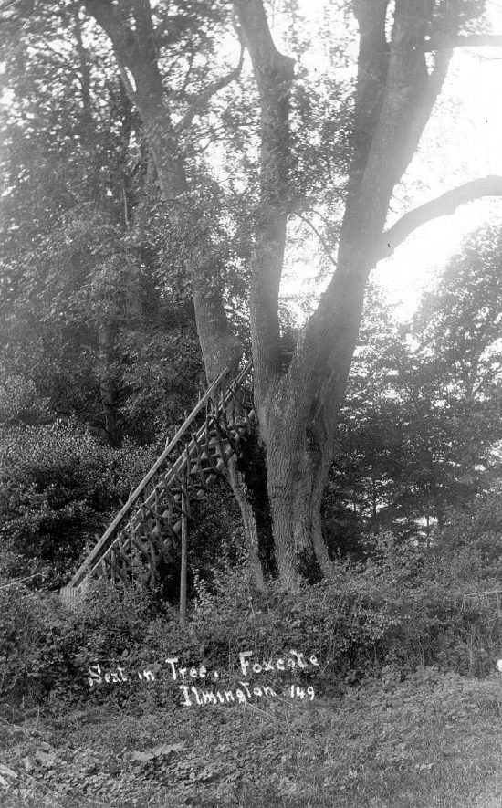 Seat in tree in wood, Foxcote.  Rustic ladder for access.  1910s |  IMAGE LOCATION: (Warwickshire County Record Office)