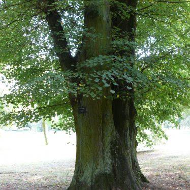 Warwickshire's Ancient Woodlands
