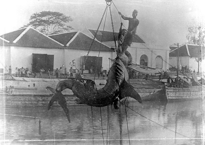 A basking shark is caught and brought in to harbour. | Image courtesy of Tropenmuseum, part of the National Museum of World Culture. Originally uploaded to Wikipedia Commons.