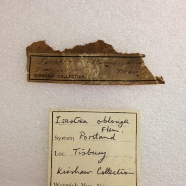 Warwickshire Natural History and Archaeological Society: Specimens and Labels