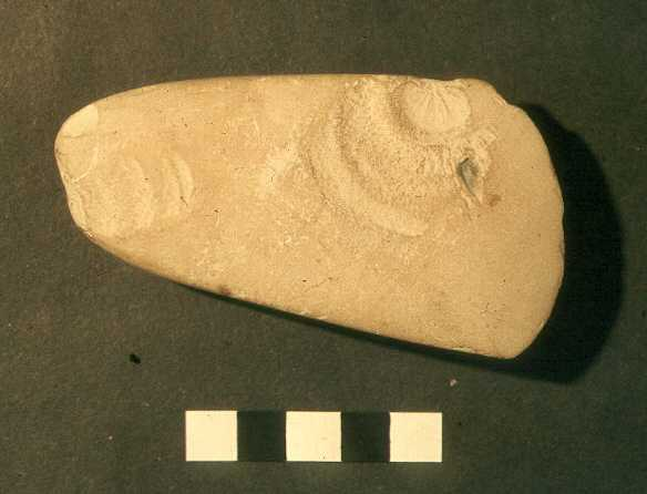 A Neolithic polished stone axehead found in Tysoe Parish   Warwickshire County Council