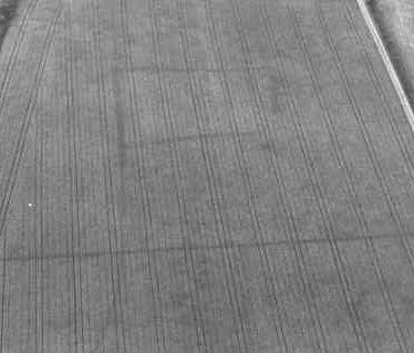 Undated linear cropmark