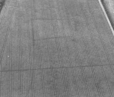 Undated linear cropmark