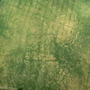 Undated crop mark enclosure,  400m east of Ingon
