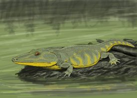 What the Mastodonsaurus might have looked like. A painting of what looks like a crocodile, with yellow stripes along its side. | Public domain image. Originally uploaded to Wikipedia Commons.