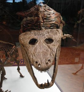 Say hello to Mastodonsaurus Giganteus. A large fossil looking a bit like a crocodile's head. | Image by Ghedoghedo, originally uploaded to Wikipedia Commons.