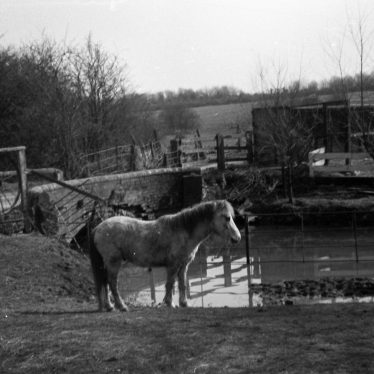 Pony and pond at Southam Zoo c. 1969. | Image courtesy of Mark Lavelle