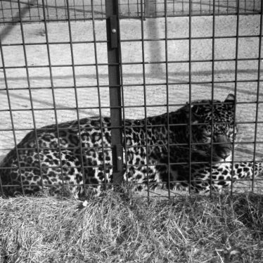 Photos of Southam Zoo c. 1969