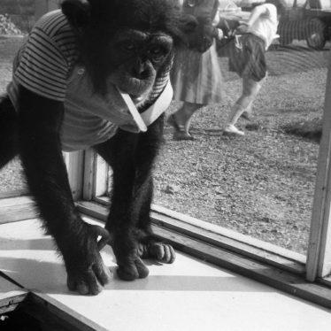Monkey at Southam Zoo, c. 1969. | Image courtesy of Mark Lavelle