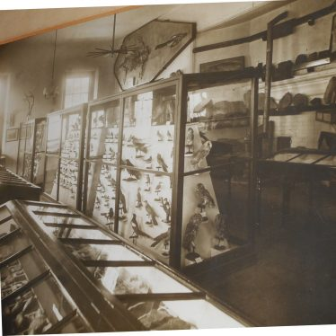 Wilmcote Plesiosaur on the First Floor of the Museum; c. 1900?   Image courtesy of Warwickshire Museum