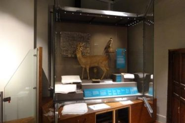 First Case at Market Hall Museum... and the Moving Bear