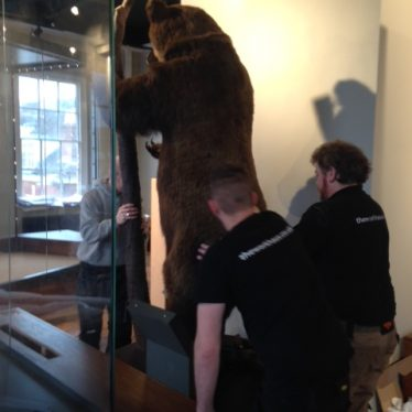 It takes a while to move this old bear.   Image courtesy of Andy Isham, Heritage & Culture Warwickshire