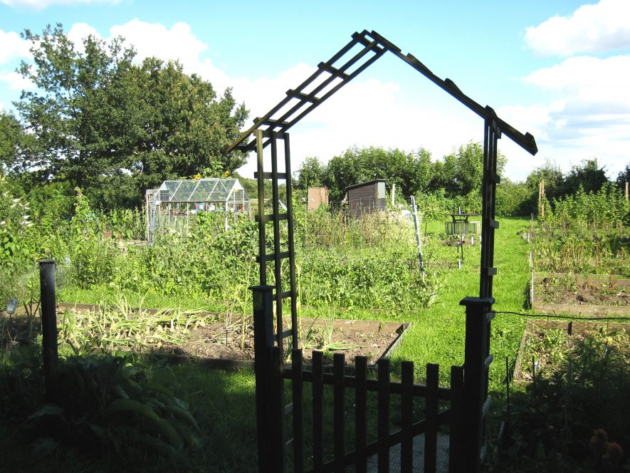 Gate in fence with wooden arch above; green house and sheds on allotments with vegetables growing and grass paths between them. Trees in the distance | Image courtesy of Anne Langley