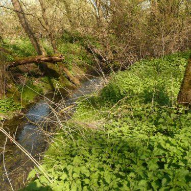 Baginton Mill