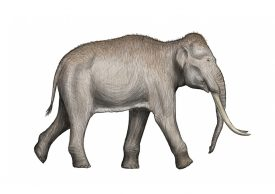 Reconstruction of a straight-tusked elephant. | Image by DFoidl. originally uploaded to Wikipedia