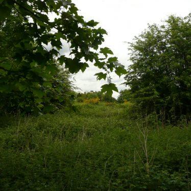 Baginton Hall park/garden, Baginton