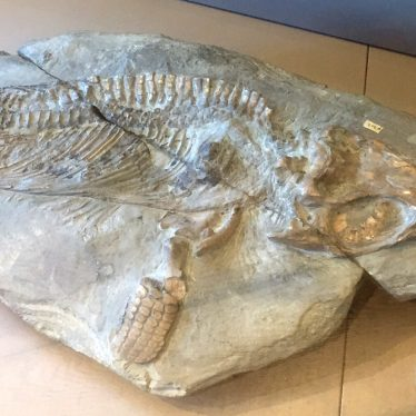 We're all Stories in the End: Maisy the Ichthyosaur
