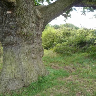 An oak on the edge of the pit on Motslow Hill might indicate that it is not modern. | Image courtesy of William Arnold