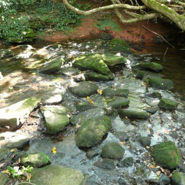 The stream near Cryfield Grange, Stoneleigh. | Image courtesy of William Arnold