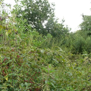 The overgrown hedge row on the lower dam renders any features unobservable. | Image courtesy of William Arnold