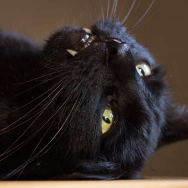 Witchcraft in Sheep Street, Stratford: Black Cats and Other Stigmatisation