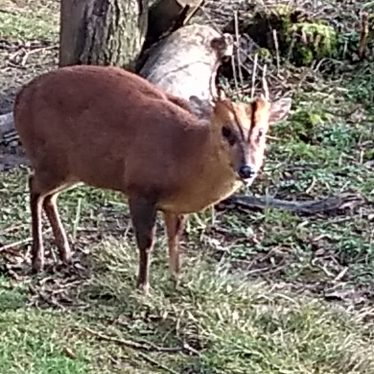 Deer at Coombe Abbey, 2018. | Image courtesy of Philip Morris