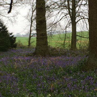 Bluebell walk. Whitacre Hall, Nether Whitacre, 2018. | Image courtesy of S Sharp