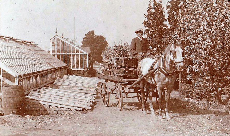 Bilton. The Woods family orchard, Lawford Lane, c. 1910. | Image courtesy of Carol Edgehill