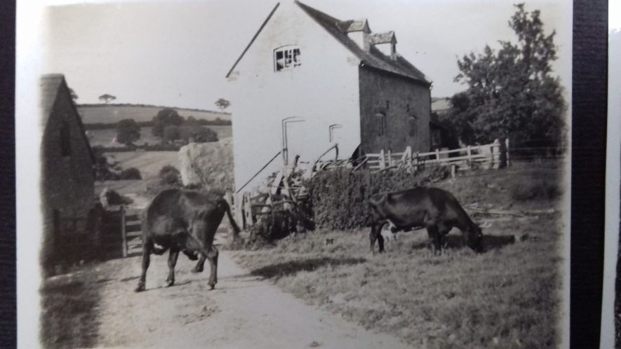 Long Compton Mill with cattle, 1941 | Image courtesy of C Tanner