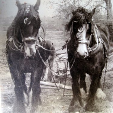 Heavy horses at Bickmarsh Hall farm. Britain and Rosie (mother and son). 1940s. | Image courtesy of Joan Broscomb