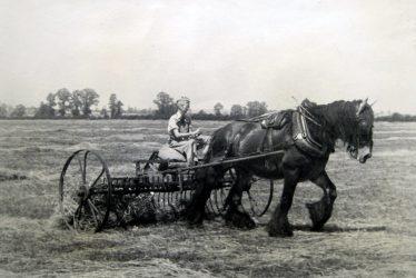 Bickmarsh. Joan Galloway Using Horse Power at Bickmarsh Hall Farm