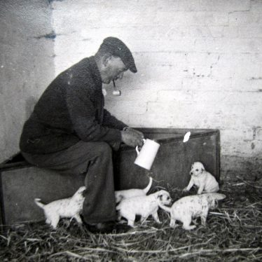 Mr Lancaster, farmer at Bickmarsh Hall,  with Dapsey and her puppies, 1940s. | Image courtesy of Joan Broscomb