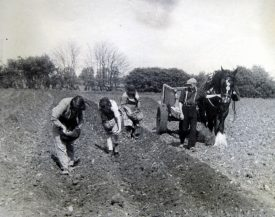 Bidford on Avon. Planting potatoes at Bickmarsh Hall Farm, 1940s. | Image courtesy of Joan Broscomb
