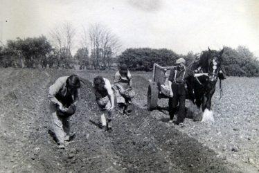 Bickmarsh. Planting potatoes at Bickmarsh Hall Farm