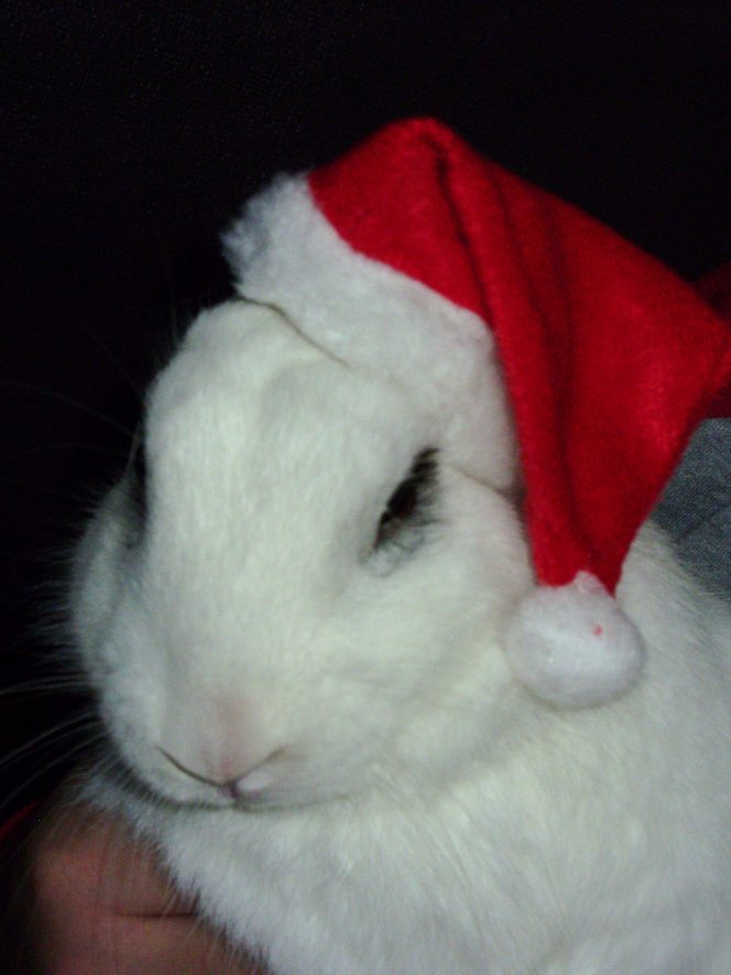What says Christmas more than a rabbit in a Santa hat? | Image courtesy of Jo Taylor