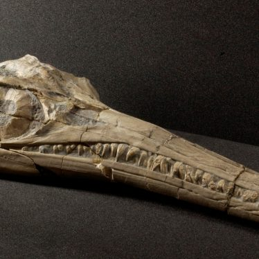 Warwickshire in 100 Objects: Ichthyosaur Skull From Binton
