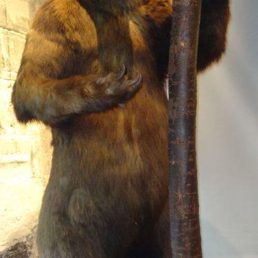 Warwickshire in 100 Objects: The Warwickshire Museum Bear