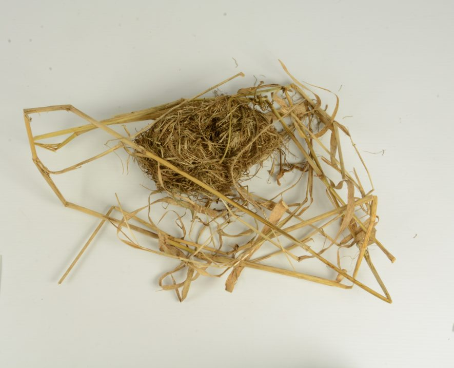 Complete nest of a harvest mouse. | Image courtesy of Warwickshire Museum