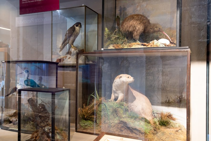 Taxidermy at Market Hall Museum, including the Otter | Image courtesy of Heritage & Culture Warwickshire