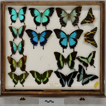 Warwickshire in 100 Objects: Butterfly Collection