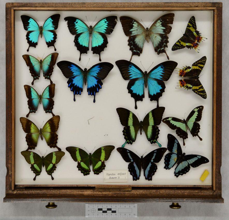 Manton butterflies