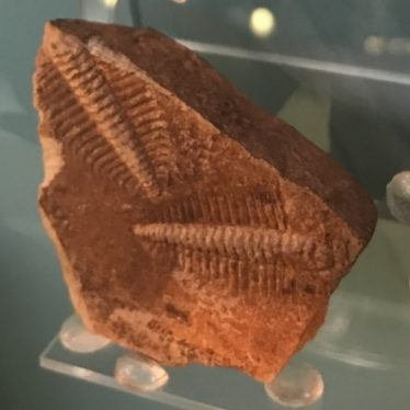 Warwickshire in 100 Objects: Fossil Trilobites