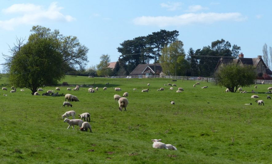 Sheep and pasture near Loes Farm, 2015. | Photo © Mat Fascione (cc-by-sa/2.0). Originally uploaded to geograph