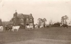 Photo of Mr Gee's farm, Castle Farm, Kenilworth where Ronald Gardner worked during WW1. |  Photo courtesy of Warwickshire County Record Office. Ref PH 352_101_50
