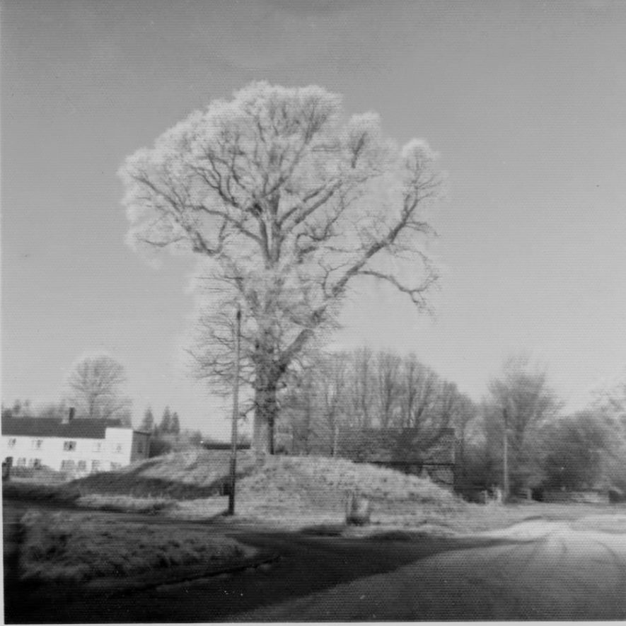 Bank Tree c. 1965. This was an elm tree on top of the village mound, prior to its removal due to Dutch Elm Disease. | Image courtesy of David Hansford