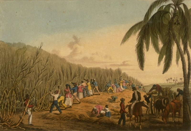 Sugar Cane Harvest, Antigua, West Indies, 1823 | Originally uploaded to slaveryimages.org